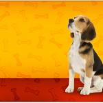 Caixa Bombom Cachorrinho Beagle