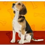 Copinho de Brigadeiro Cachorrinho Beagle