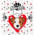 Caixa Dia das Maes jack russell terrier